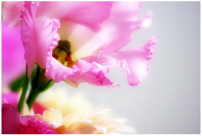 hira-hira-pinks.jpg